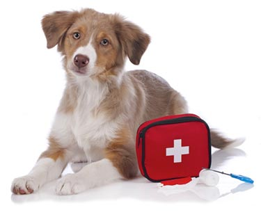 Pet First Aid Course